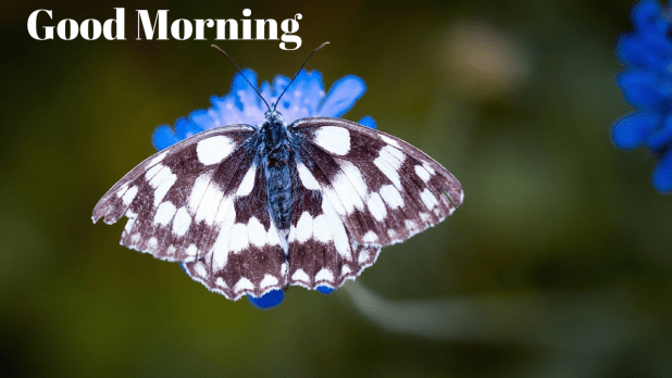 3d image of butterfly | good morning