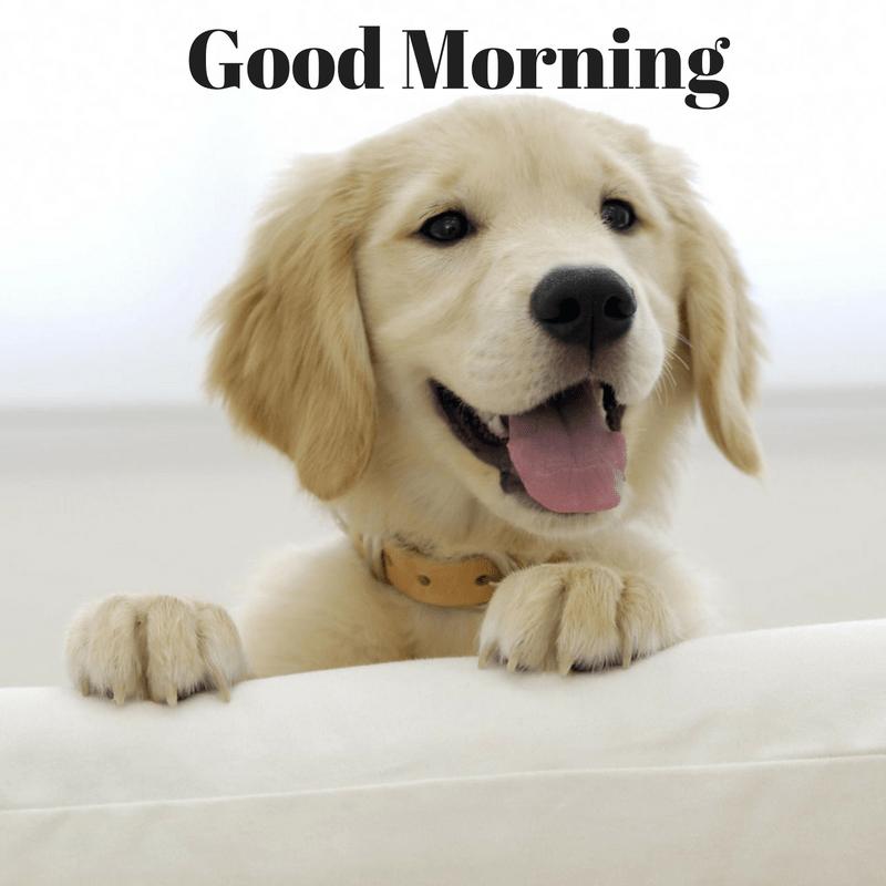 cute good morning puppy