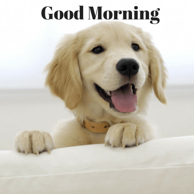 cute puppy pictures of good morning