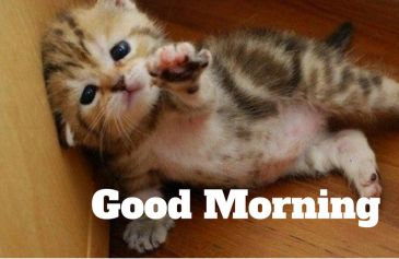 Good morning kitty images