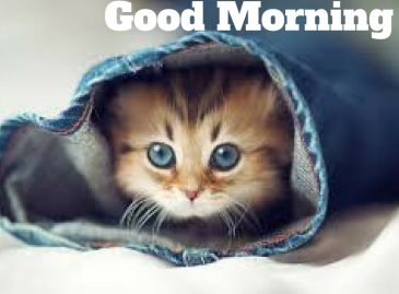 cat good morning image