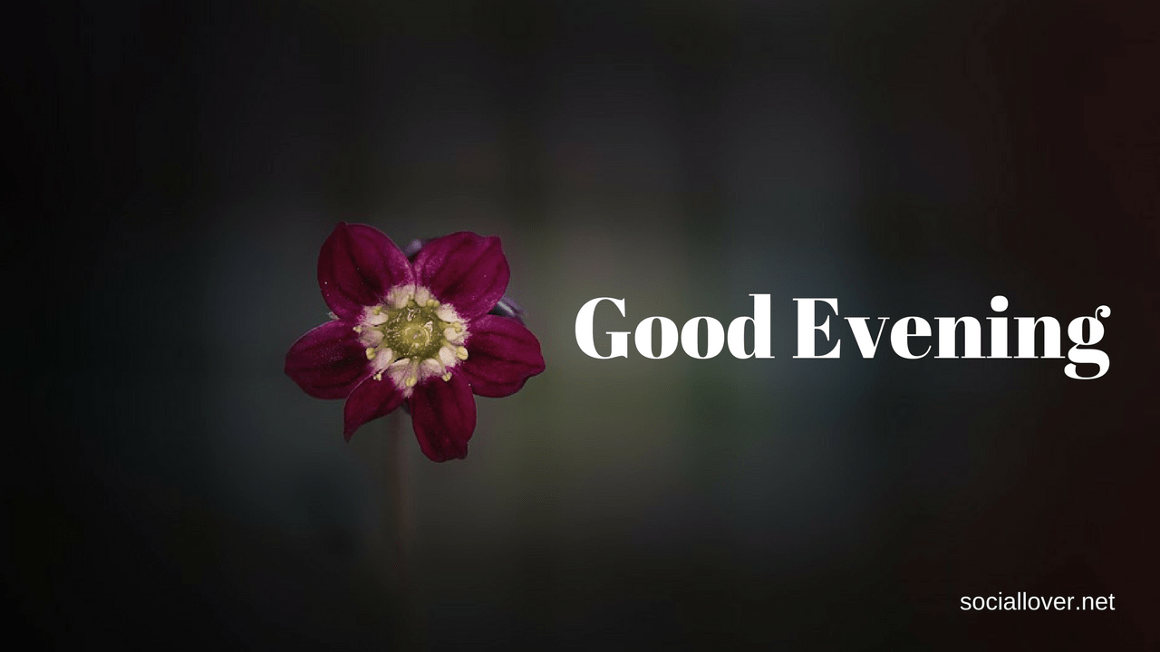 Good Evening Images Free Download For Whatsapp Facebook Twitter