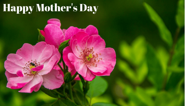 happy mother's day image with flower and quotes