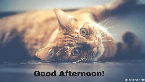 cat good afternoon images