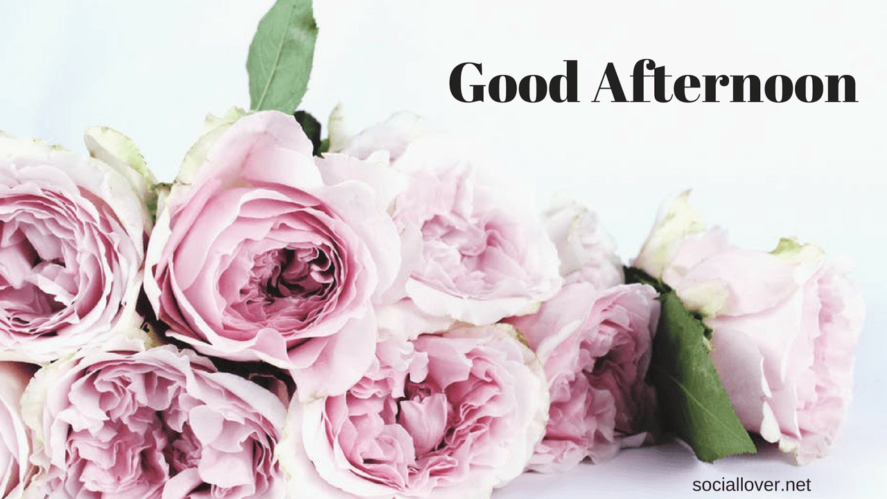 Good Afternoon Hd Images Wallpapers Pics Quotes Messages For