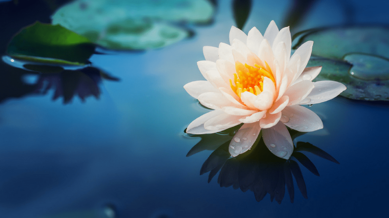 Flower Images Hd Free Download For Whatsapp Facebook Social Lover