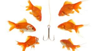 """""""Recruitment"""": Sechs Goldfische die auf einen Angelhaken schauen - war of talent"""
