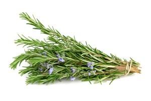 Rosemary isolated on white