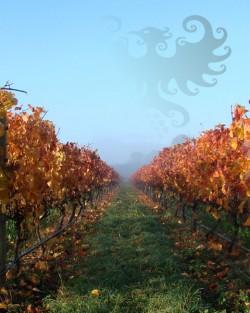 Matahiwi Estate Vineyard misty logo