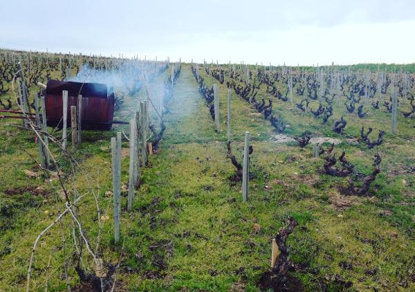 Chateau du Moulin a Vent vineyard burning vine shoots pruning beaujolais social vignerons