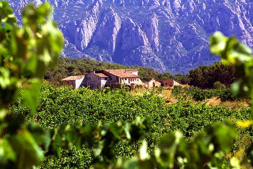 vinedos_penedes vineyard winery penedes wine region catalunya spain