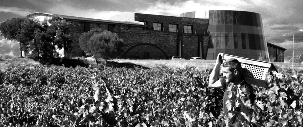 bodega-dominio-de-cair-exterior-vineyard-building-harvest