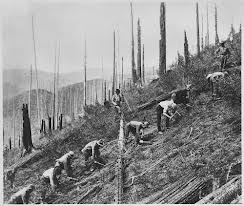 CCC workers planting trees
