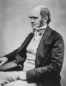 Photograph of Charles Darwin seated, facing left