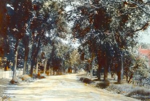 Red Farm Tree Lined Road, Wrentham, 1905