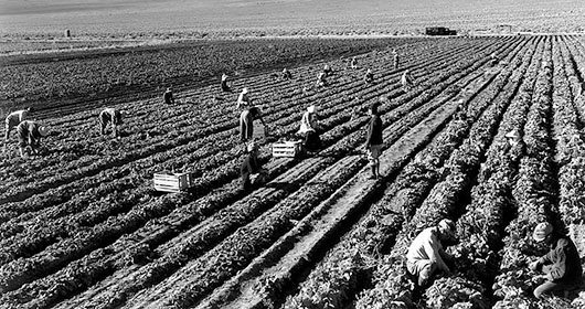 Farm Workers at Manzanar Relocation Center, CA 1943 by Ansel Adams