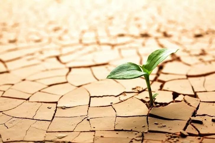 earthday_soil
