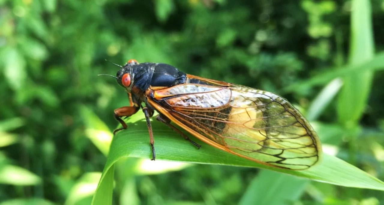 https://i1.wp.com/socientifica.com.br/wp-content/uploads/2019/06/062419_TI_zombie-cicada_feat.jpg?resize=1280%2C685&ssl=1
