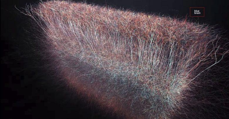 Cientistas encontram universo multidimensional no cérebro