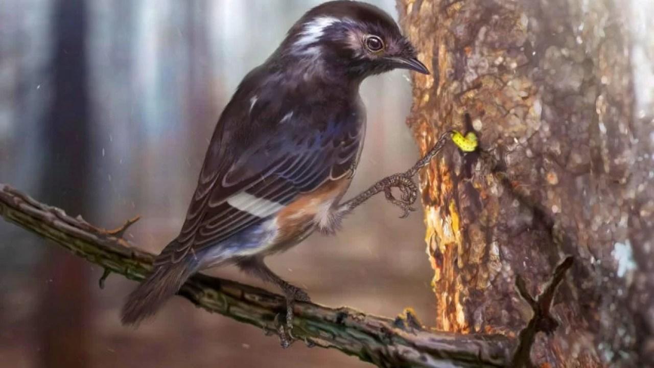Pássaro de 99 milhões de anos com dedo incomum encontrado em âmbar