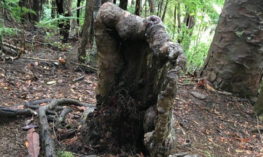 https://i1.wp.com/socientifica.com.br/wp-content/uploads/2019/08/Árvore-deveria-estar-morta.jpg?resize=900%2C539&ssl=1