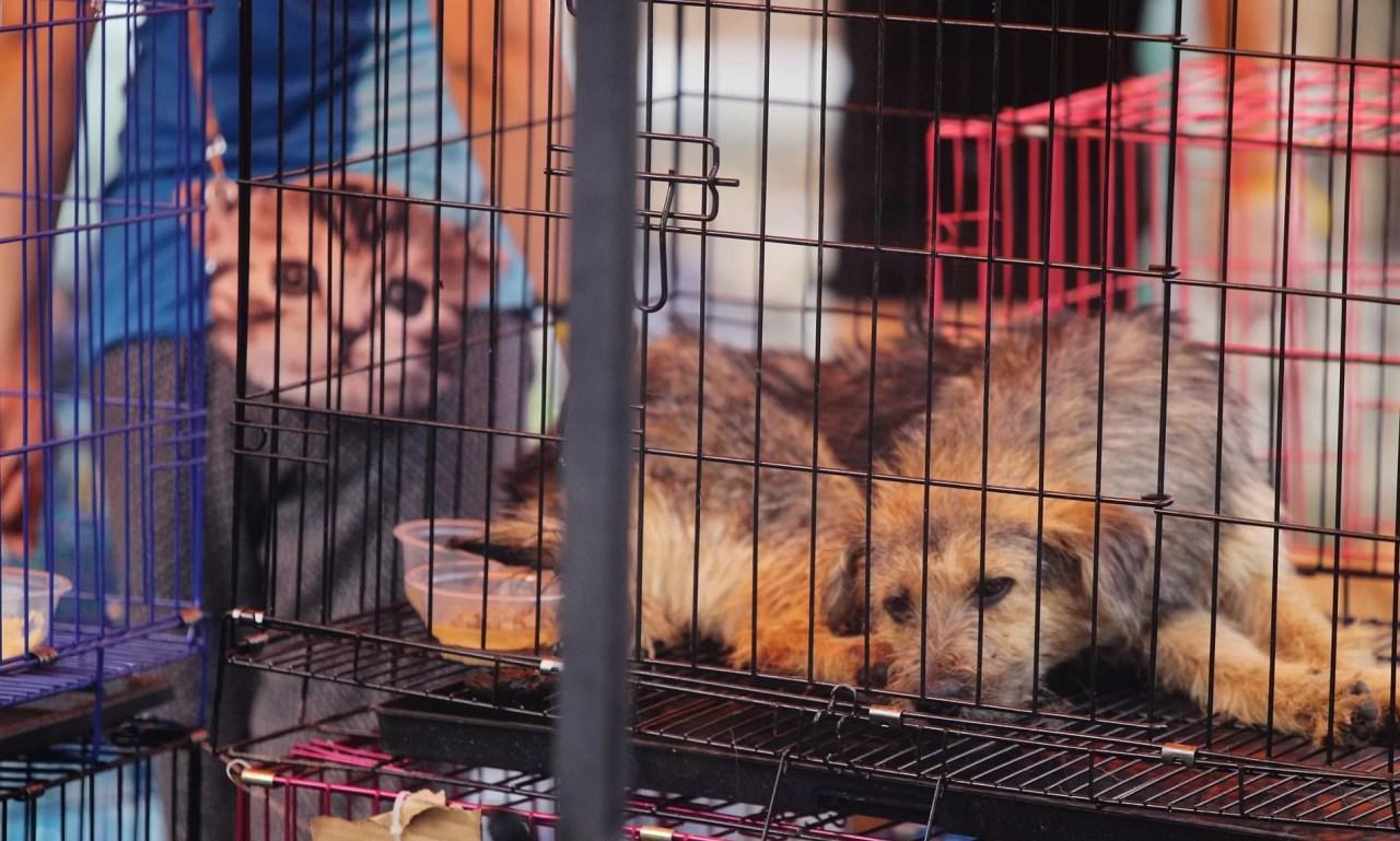 Shenzhen se tornou a primeira cidade chinesa a proibir a venda e o consumo de carne de cães e gatos.