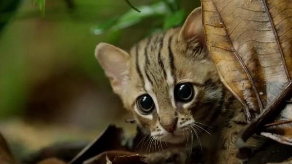 Menor gato do mundo