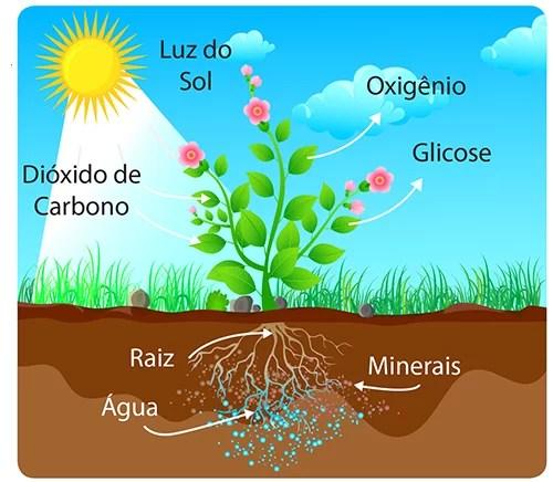 como ocorre a fotossíntese
