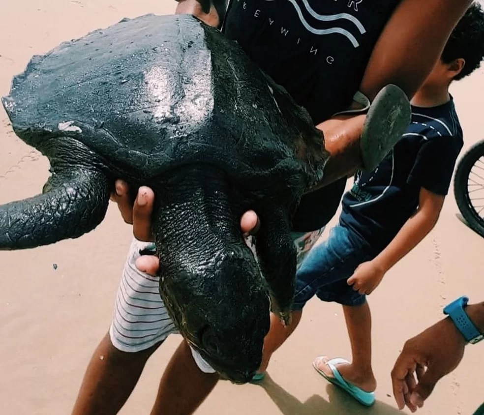 tartaruga vazamento de petróleo