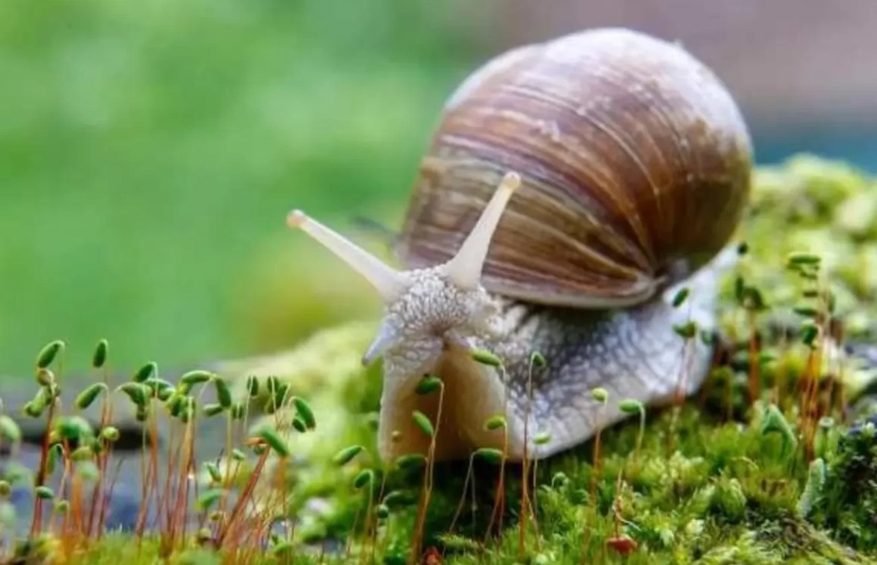 5 animais perigosos apesar de suas aparências inofensivas