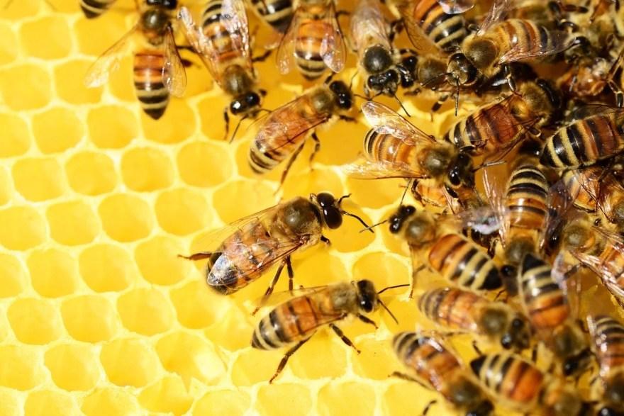 Pixabay, https://pixabay.com/pt/photos/mel-de-abelhas-colm%C3%A9ia-mel-abelhas-326337/