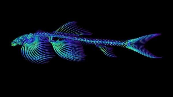 peixe que anda fora da água