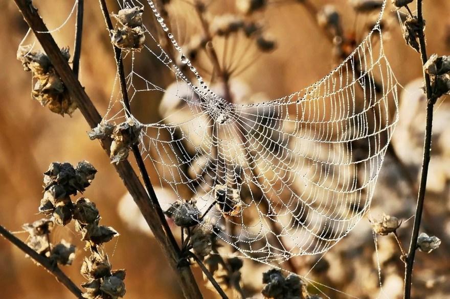 seda da aranha