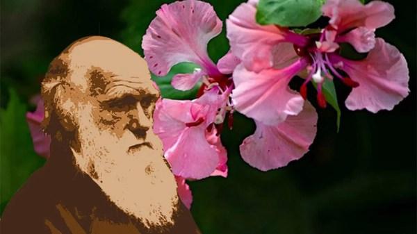 Mistério da Flor de charles darwin