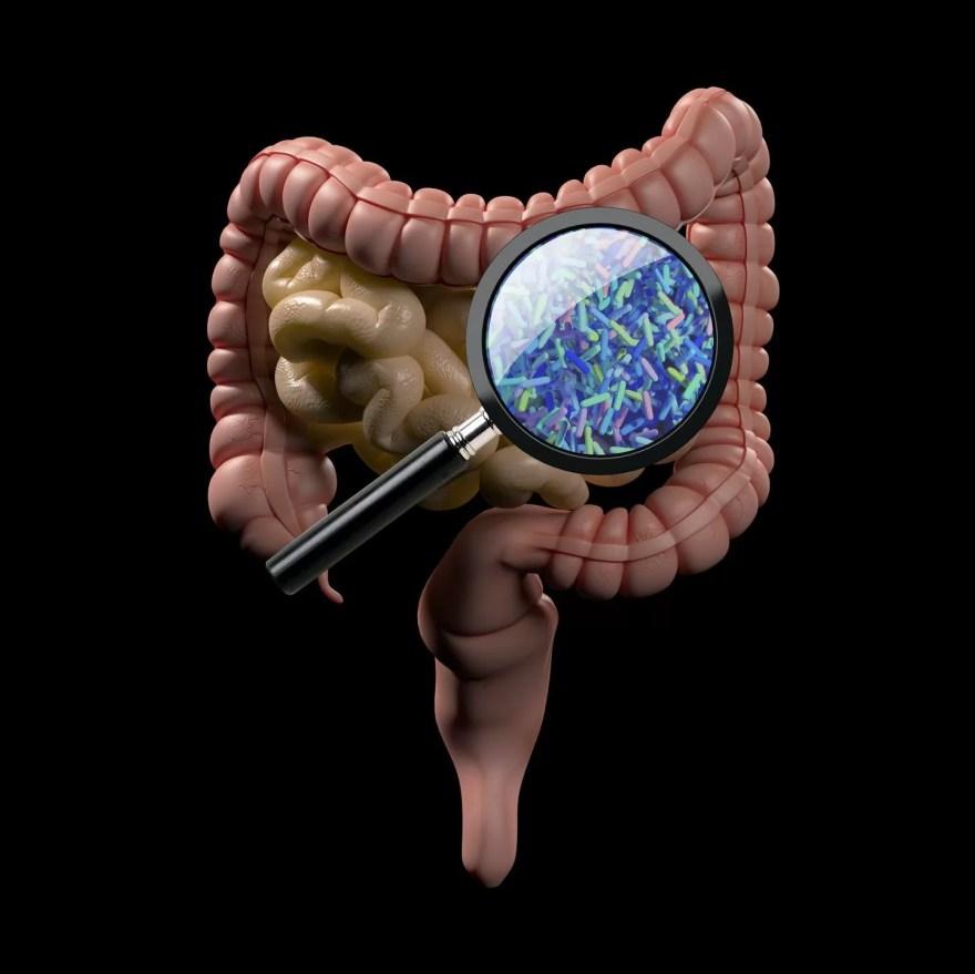 Transplantes fecais  em pacientes com câncer