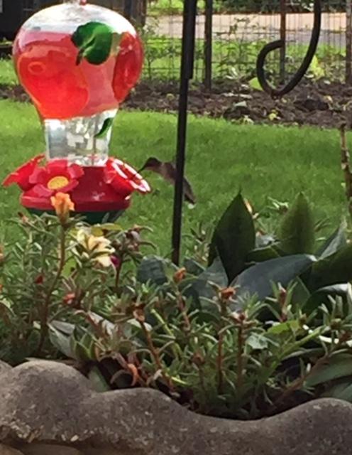 Succulent and Hummingbird