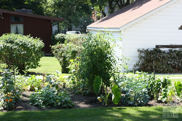 Why every garden is a victory garden