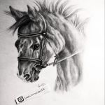 Realistic Pencil Sketch Horse Syed Mrsaleen Thesocialcomment