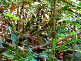 Find the lizard in the picture