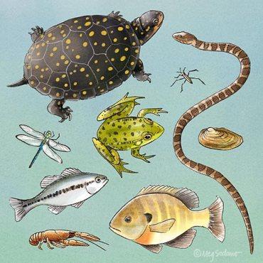 Pond Animals (pencil, digital)