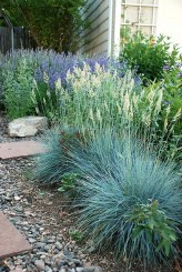I love Blue Fescue and want to work it into many places in my flower gardens. D