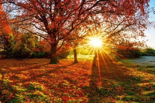 Albero in autunno – Tutte le curiosità di questa stagione