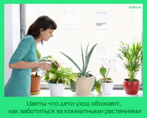Комнатные, садовые цветы и растения, уход за растениями ...
