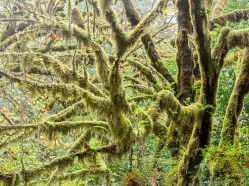 Magical moss - Prairie Creek, Redwood National and State Parks