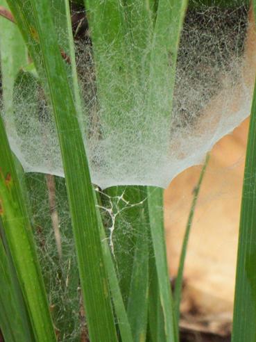 Spiderwebs-023