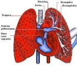 Definition of respiratory system - What it is, Meaning and Concept