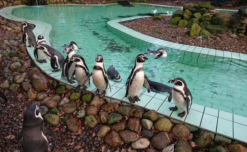Synchronschwimmen Pinguin schwimmen