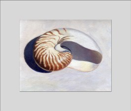 nautilus shell triptych 2 matted