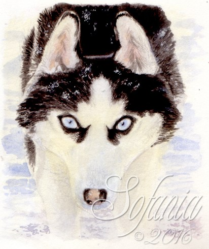 aceo_wm-huskie_ic-is