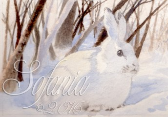 aceo_wm-snow-hare